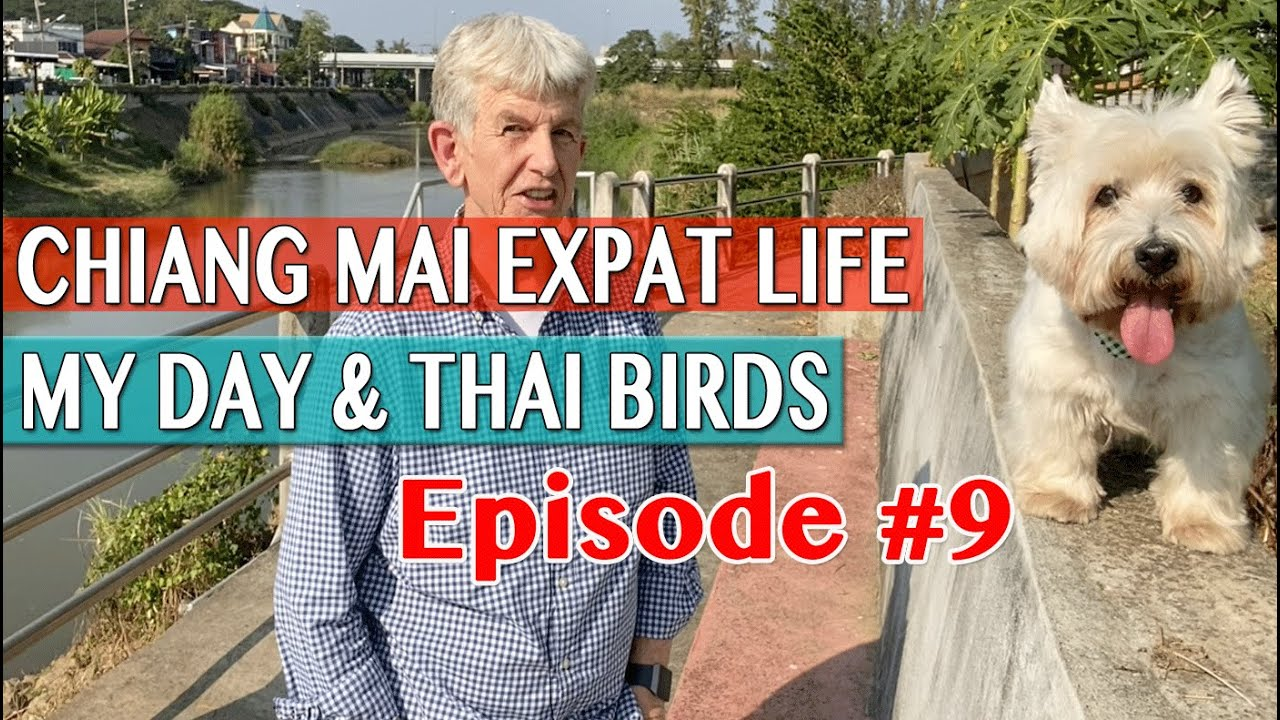 Chiang Mai Expat Life - My Day And Thai Birds