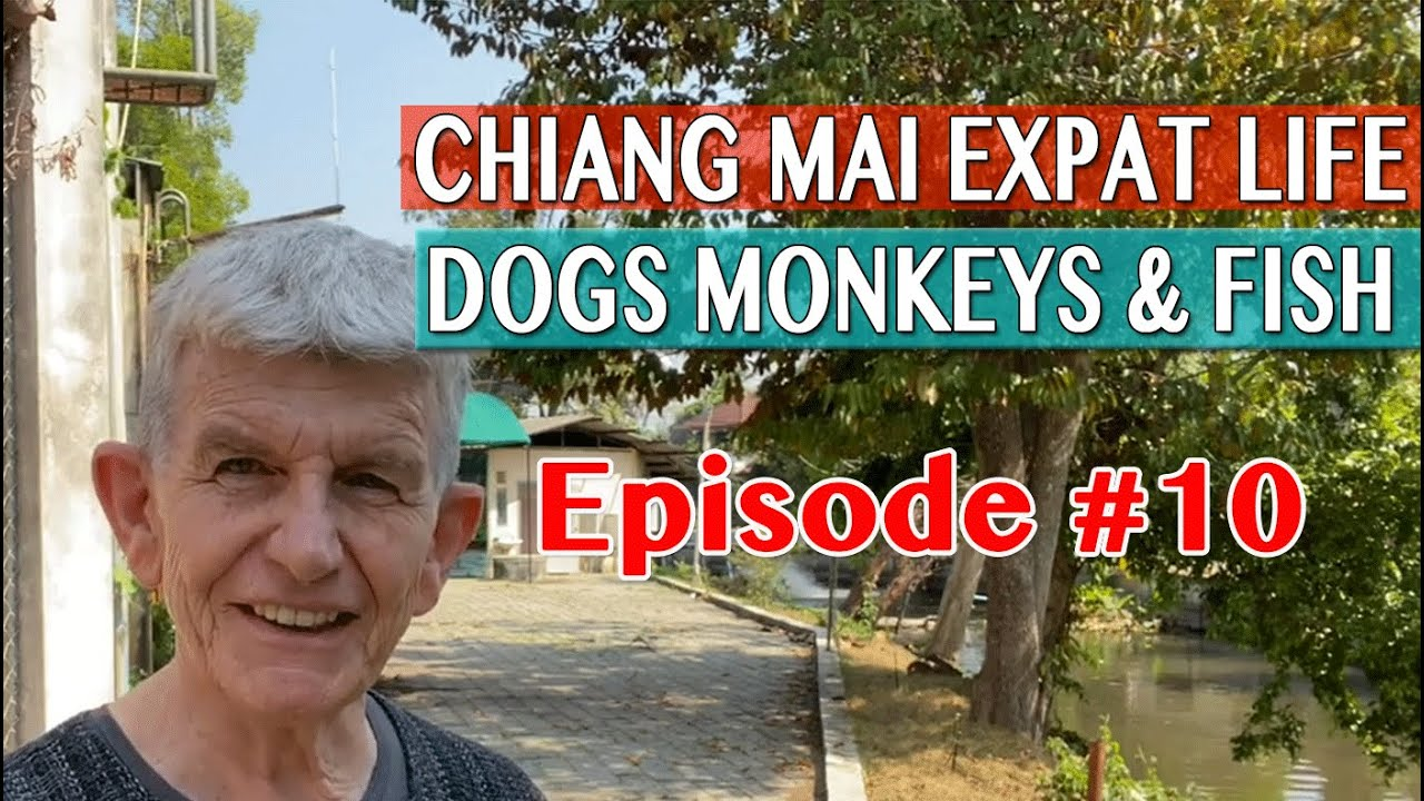 Chiang Mai Expat Life - Dogs Monkeys & Fish