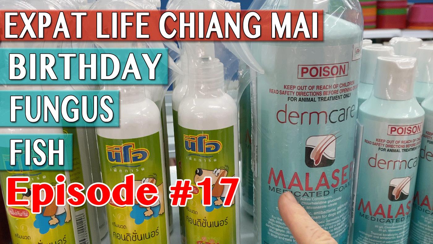 Expat Life Chiang Mai - Birthday Fungus & Fish